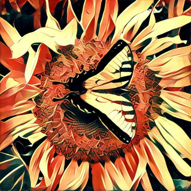 Took a photo of a butterfly and used the prismahellip