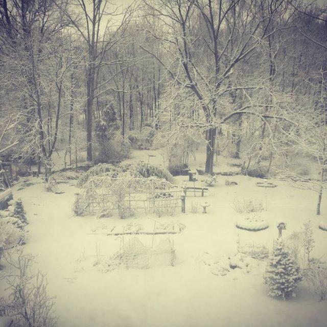 Good morning winter! snow sner