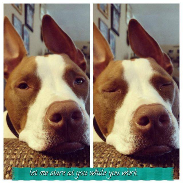 dog dogsofinstagram dogstagram