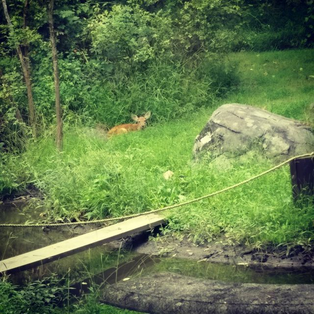 Random deer fawn out back Looks really young didnt seehellip