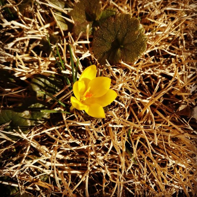 First wild flower we have here this year so farhellip