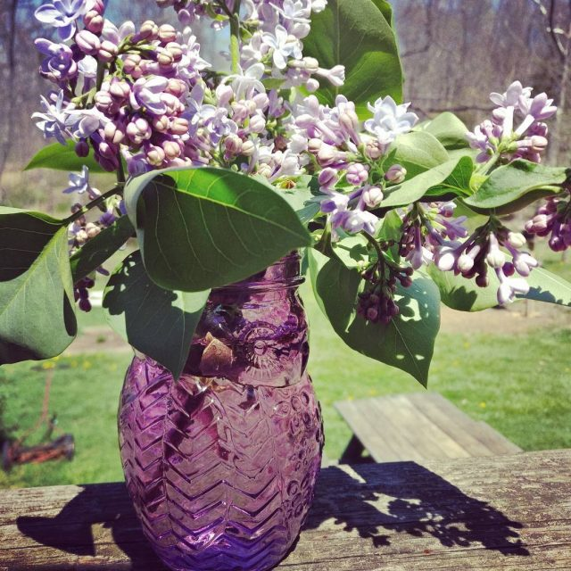 Lilacs bloomed while I was camping Perfect for an owlhellip